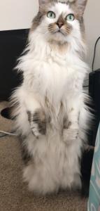 catstandingup